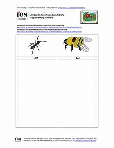 63 Best Minibeasts Images On Pinterest
