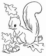 Squirrel Animals Coloring Drawing Kb sketch template