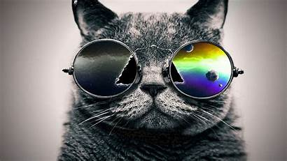 Cat Cool Cats Glasses Looking Sunglasses Coolest