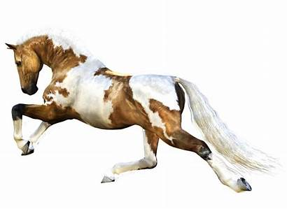 Horse Running Transparent Mottled Brown American Cavalo