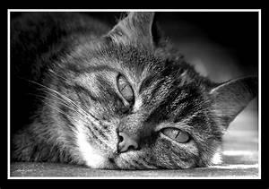Schwarz Weiß Bilder Tiere : stubbsi schwarz weiss foto bild tiere haustiere katzen bilder auf fotocommunity ~ Markanthonyermac.com Haus und Dekorationen