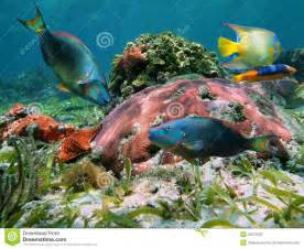 Colorful Tropical Fish Coral Reef