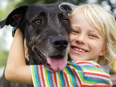 euthanise pet increasing owners pets number