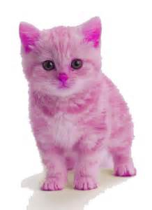 a pink kitten oh my goodness so cats