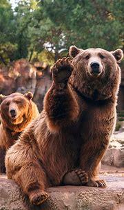 Animal / Bear (1080x1920) Mobile Wallpaper - Animal / Bear ...