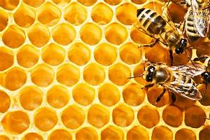 Honey bee   desibantu  Honeycomb