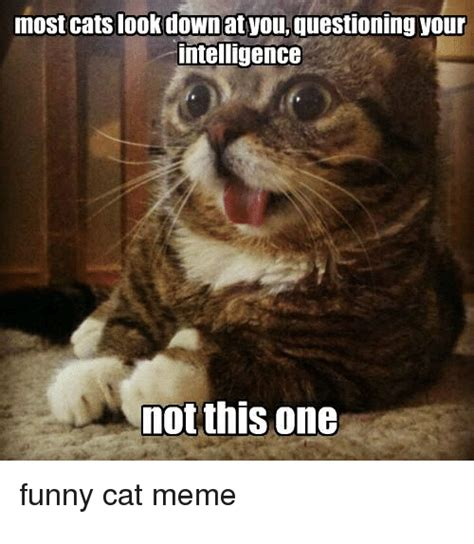 Cat Interesting Meme - most cats look downat youquestioning your intelligence not this one funny cat meme cats meme