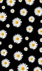 Daisy wallpaper | Daisy wallpaper, Supreme wallpaper ...