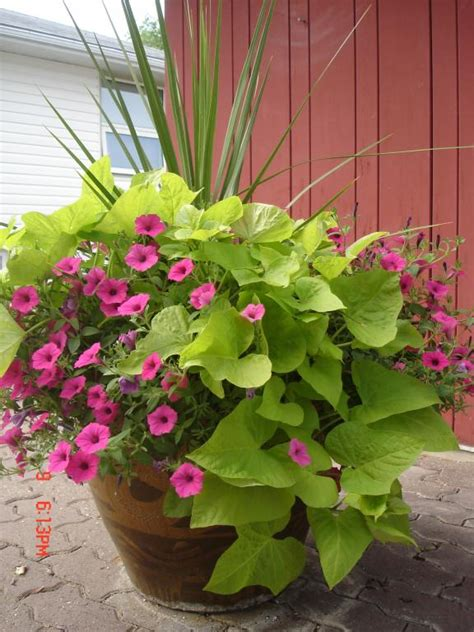 Container Gardening  Blog » Rutgers Landscape & Nursery