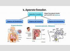 Aparato cardiovascular, sistema cardiopulmonar y aparato