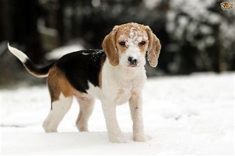 keeping dogs happy healthy   winter months