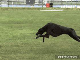 Greyhound running at full speed in slow-mo. Poetry in ...