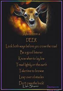 Advice from a D... Elk Animal Quotes