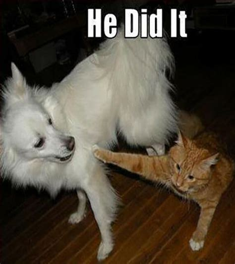 funny cat  dog pics  captions entertainmentmesh