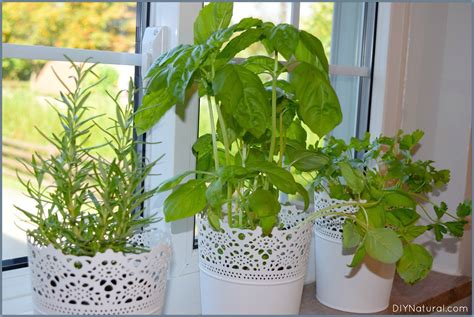 Herb Garden Indoor : Reasons You Should Be Growing Herbs