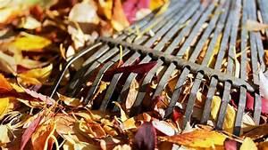 Garten Im Herbst : garten im herbst so machen sie ihren garten winterfest bayern 1 radio ~ Watch28wear.com Haus und Dekorationen