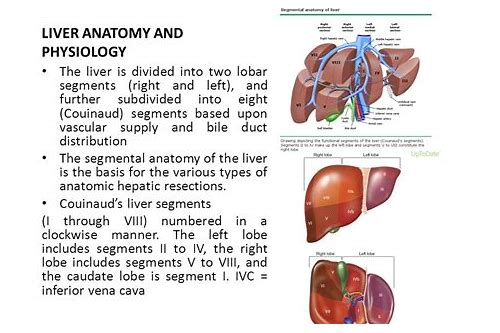 Liver Anatomy Video Download Retrihardturb