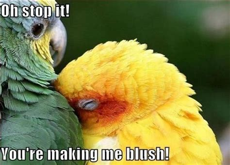 Making Me Blush Meme - making me blush so cute loves pinterest