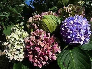 Welche Blumen Blühen Im Mai : nebensaison auf den azoren na klar azoren blog ~ Eleganceandgraceweddings.com Haus und Dekorationen