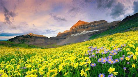 beautiful mountain flowers scenery hd wallpaper preview