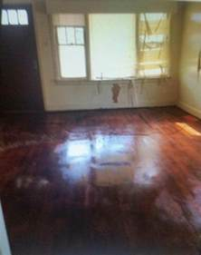 cleaning cat urine smell on hardwood floors thriftyfun