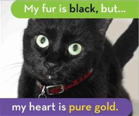 Black Cat Meme - kalamazoo animal rescue don t judge a kitten by the color of its fur