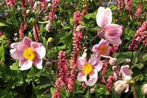 Balkonblumen Richtig Pflanzen : stauden richtig pflanzen harmonie z hlt ~ Frokenaadalensverden.com Haus und Dekorationen