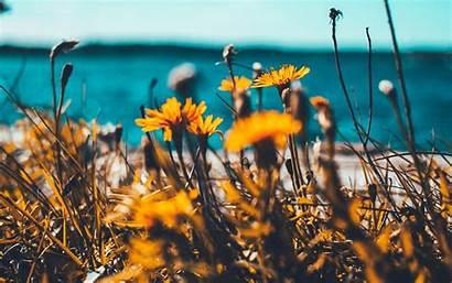 Summer Spring Nature Flower 4k Macbook Pro