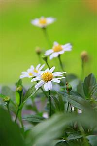 beautiful daisies pictures photos and images for