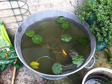 poissons pour un bac en zinc forum bassin de jardin