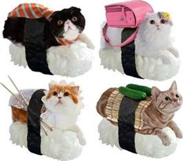 sushi cats sushi cats because japan technabob