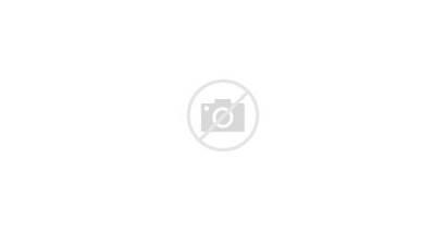 Animals Vector Wild Different Kind Illustration Cartoon