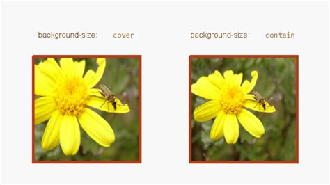 Css Background Image Cover Css3 Background Size