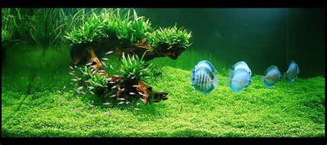 Aquascape Takashi Amano by Takashi Amano Zen And The Of The Aquascape The