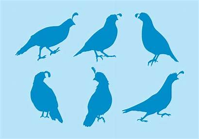 Quail Vector Silhouettes Chicken Silhouette Clipart Graphics