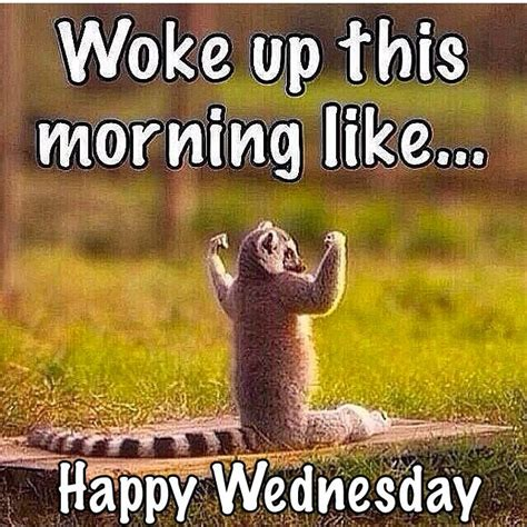 Wednesday Meme - woke up this morning like happy wednesday wild things pinterest happy wednesday
