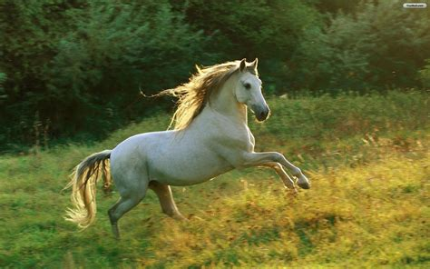 horse cool funny animals cute amazing