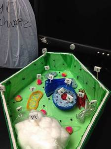 Plant Cell Model  I Got A 100 On This