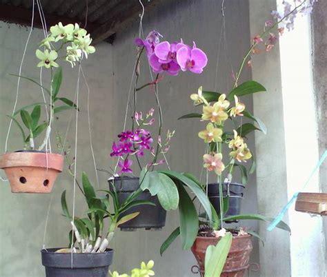 tanaman hias menanam bunga anggrek secara hidroponik