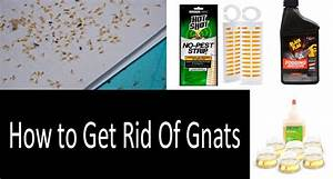 how to get rid of gnats in bathroom 28 images what With how to get rid of gnats in your bathroom