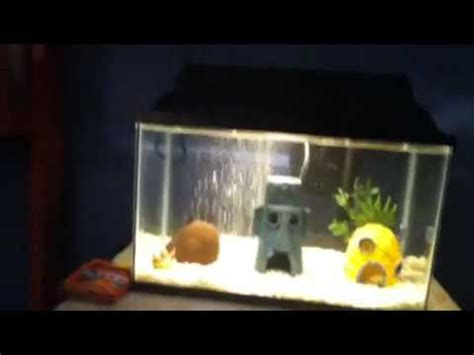spongebob fish tank