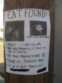 cat found flickr photo