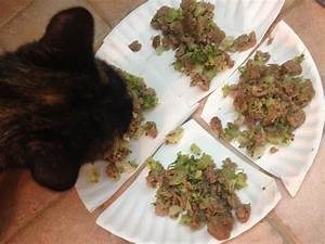 Homemade Pet Food Recipes