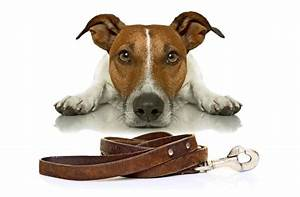 Hundehaltung Mietwohnung 2017 : dog sharing teilzeit herrchen f r den hund wissen ~ Lizthompson.info Haus und Dekorationen
