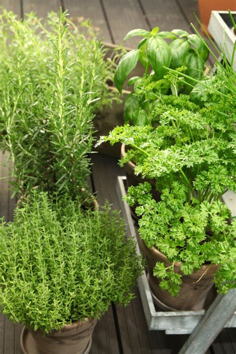 les herbes de cuisine comment conserver les herbes aromatiques avez vous des