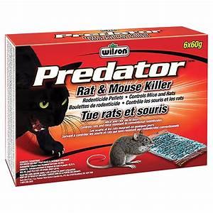 Produit Pour Tuer Les Souris : wilson pastilles de rodenticide pour rats et souris predator 7740110 rona ~ Melissatoandfro.com Idées de Décoration