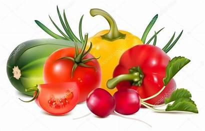 Vegetables Fresh Vector Illustration Colorful Clipart Illustrations