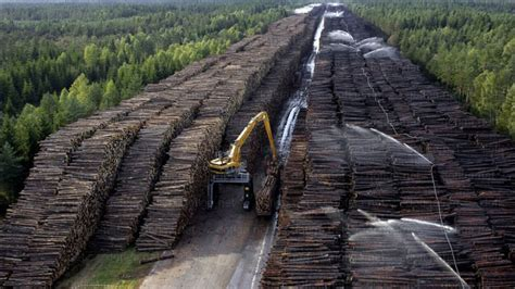 worlds largest wood stockpile  absolutely insane