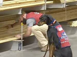 lowes store hires veteran with ptsd and his service dog With lowes hires service dog