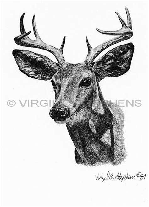ceous deer    mexico az  nm
